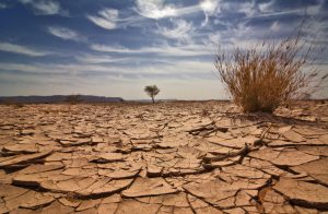 Cracked, dry earth in desert